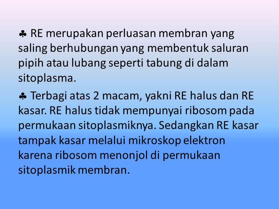 7. Retikulum Endoplasma ( RE )