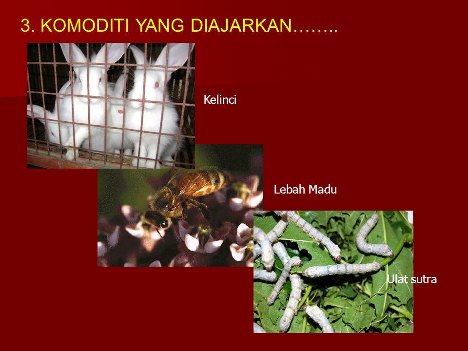 3. KOMODITI YANG DIAJARKAN…….. Lebah Madu Kelinci Ulat sutra