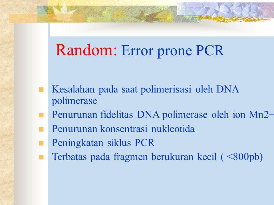 Random: Error prone PCR Kesalahan pada saat polimerisasi oleh DNA polimerase Penurunan fidelitas DNA polimerase oleh ion Mn2+ Penurunan konsentrasi nukleotida Peningkatan siklus PCR Terbatas pada fragmen berukuran kecil ( <800pb)