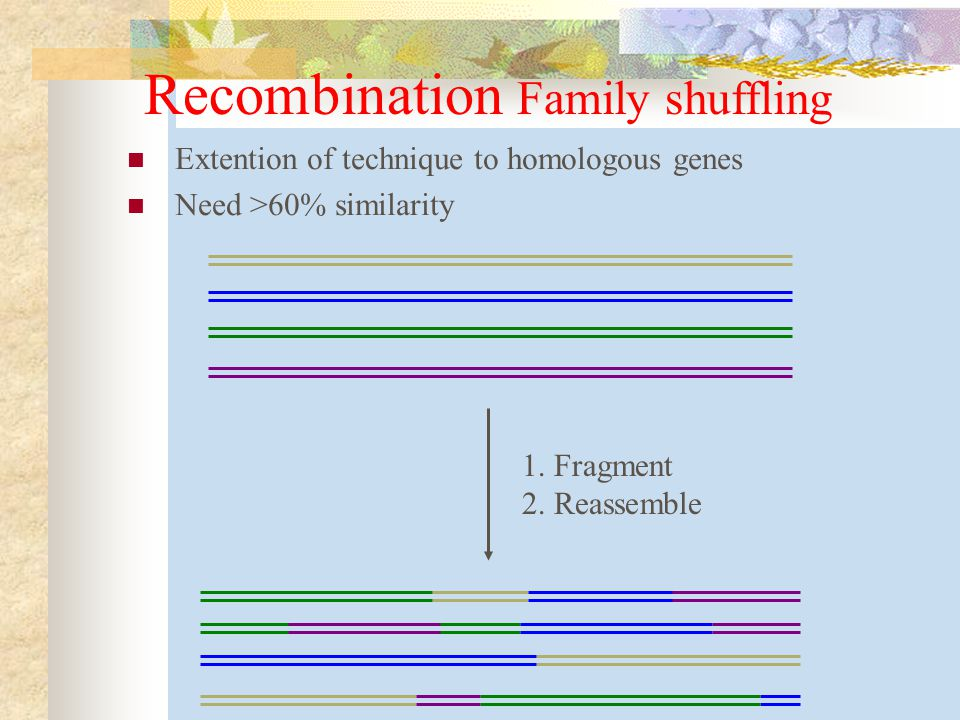 Recombination Family shuffling Extention of technique to homologous genes Need >60% similarity 1.