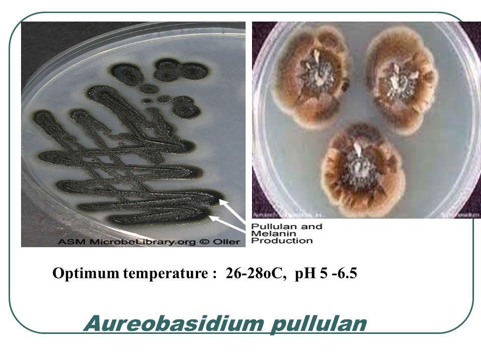 Factors affecting gellan gum production (cont.) 5.Agitation rate : 250 rpm using a helical ribbon impeller 6.