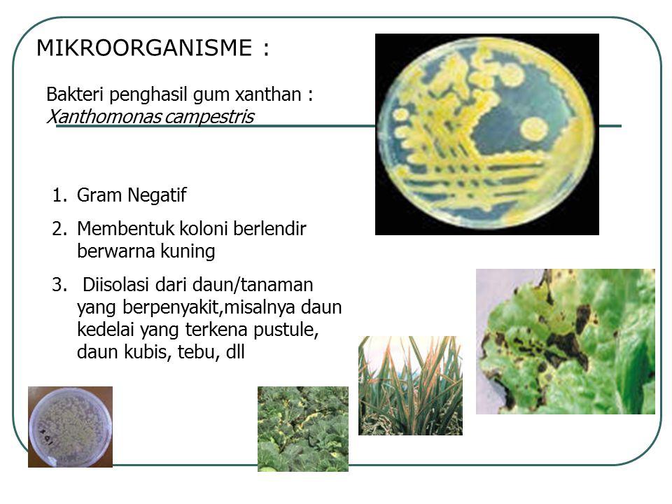 MIKROORGANISME : Bakteri penghasil gum xanthan : Xanthomonas campestris 1.Gram Negatif 2.Membentuk koloni berlendir berwarna kuning 3. Diisolasi dari