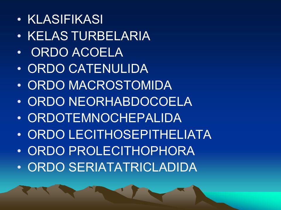 KLASIFIKASI KELAS TURBELARIA ORDO ACOELA ORDO CATENULIDA ORDO MACROSTOMIDA ORDO NEORHABDOCOELA ORDOTEMNOCHEPALIDA ORDO LECITHOSEPITHELIATA ORDO PROLEC