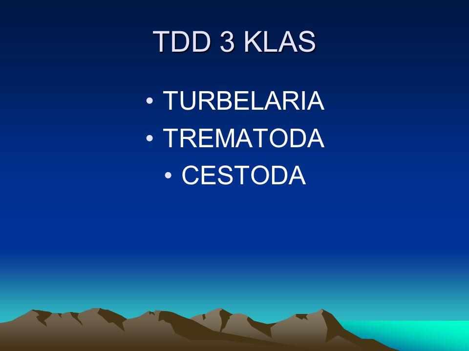 TDD 3 KLAS TURBELARIA TREMATODA CESTODA