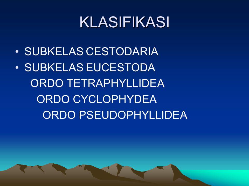 KLASIFIKASI SUBKELAS CESTODARIA SUBKELAS EUCESTODA ORDO TETRAPHYLLIDEA ORDO CYCLOPHYDEA ORDO PSEUDOPHYLLIDEA
