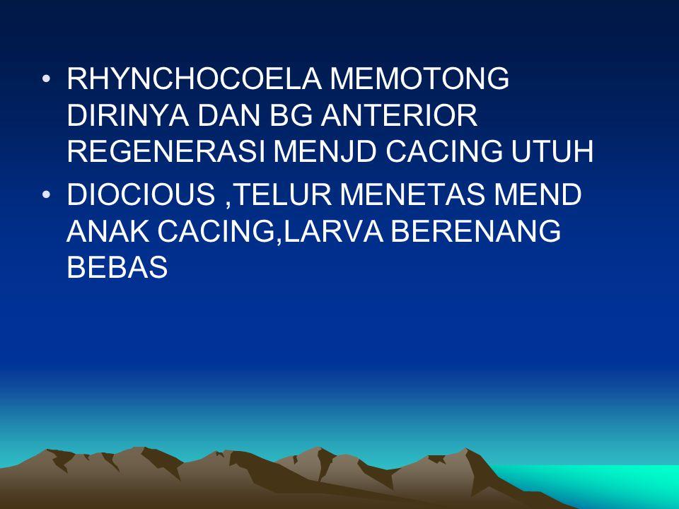RHYNCHOCOELA MEMOTONG DIRINYA DAN BG ANTERIOR REGENERASI MENJD CACING UTUH DIOCIOUS,TELUR MENETAS MEND ANAK CACING,LARVA BERENANG BEBAS