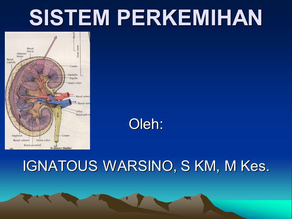 SISTEM PERKEMIHAN Pengertian: Sistem perkemihan adalah sistem utk menge luarkan urine, dg sgl zat yg dpt dikeluarkannya.