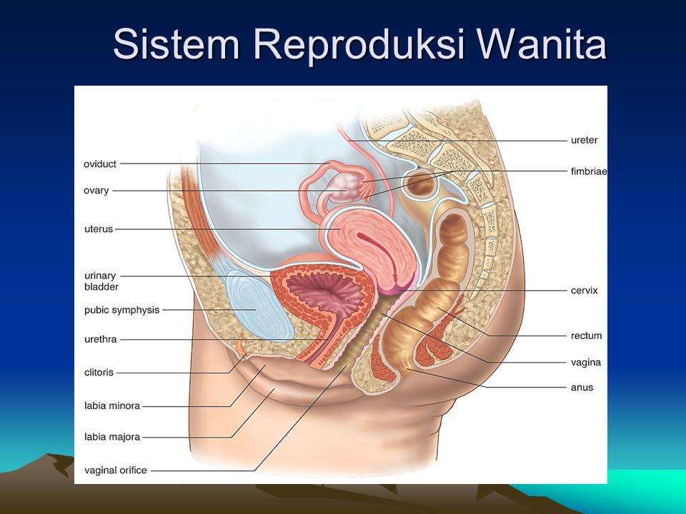 Sistem Reproduksi Wanita