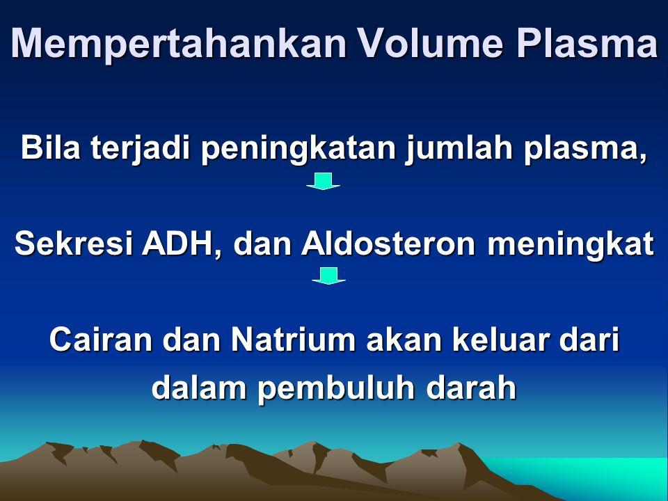 Mempertahankan Volume Plasma Bila terjadi peningkatan jumlah plasma, Sekresi ADH, dan Aldosteron meningkat Cairan dan Natrium akan keluar dari dalam pembuluh darah