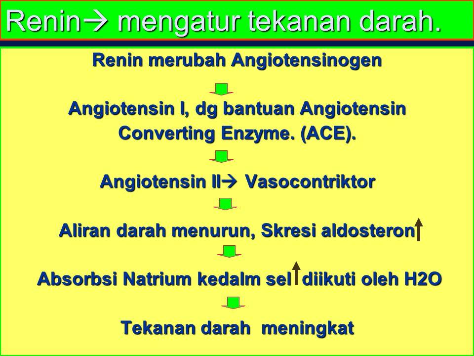 Renin  mengatur tekanan darah. Renin merubah Angiotensinogen Angiotensin I, dg bantuan Angiotensin Converting Enzyme. (ACE). Angiotensin II  Vasocon