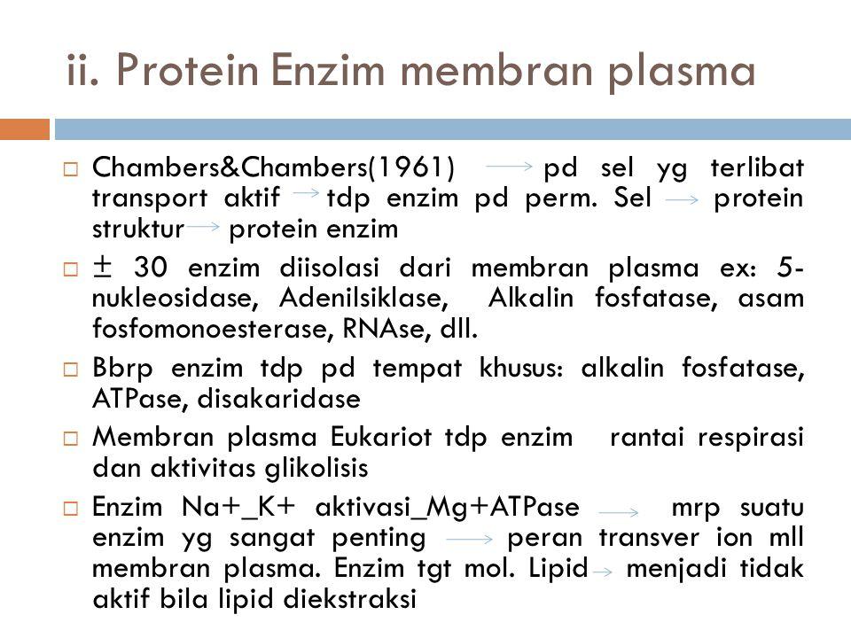 Protein integral (lanjutan)  Glikoprotein: BM 55.000 ( 60% brp karbohidrat)  Protein intrinsik eritrosit ( BM 95.000)  Bentuk Globular, kasar, berh
