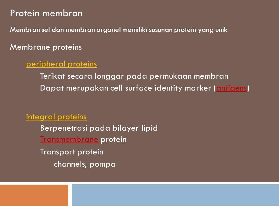 Membran sel terdiri dari protein dan molekul lain yang tertanam yang tertanam dalam matrik fluida bilayer lipid FLUID- karena phospholipid dan protein