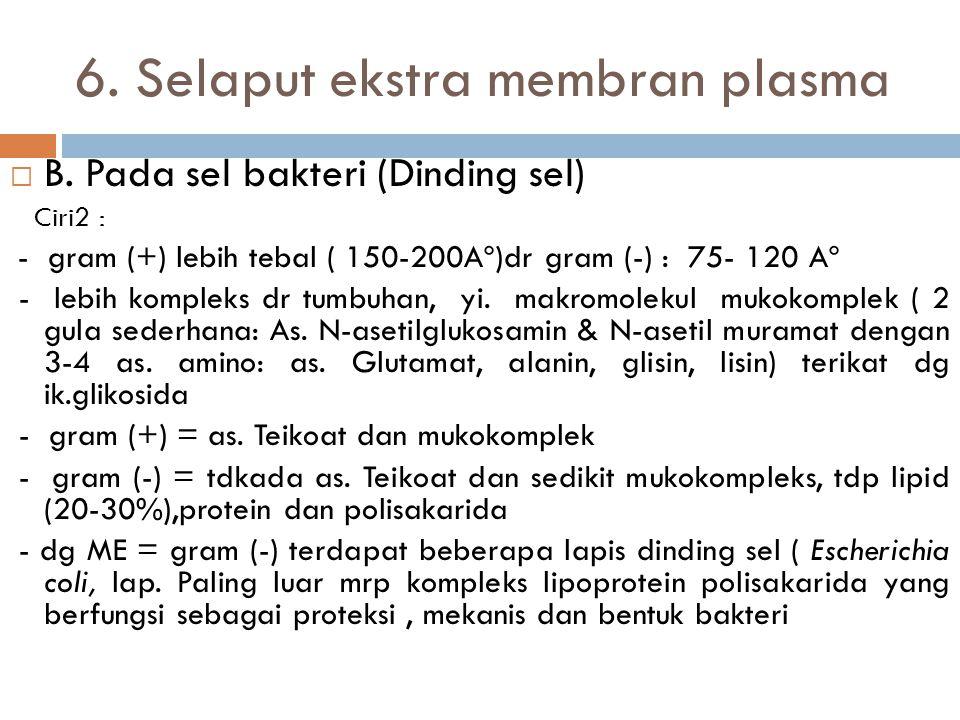 "6. Selaput ekstra membran plasma A. Pada sel hewan - Struktur : membran basal, lamina basal, "" boundary layer"", glykoprotein mantle, lamina eksterna,"