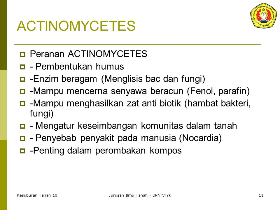 Kesuburan Tanah 10Jurusan Ilmu Tanah - UPN[V]Yk11 ACTINOMYCETES  Peranan ACTINOMYCETES  - Pembentukan humus  -Enzim beragam (Menglisis bac dan fungi)  -Mampu mencerna senyawa beracun (Fenol, parafin)  -Mampu menghasilkan zat anti biotik (hambat bakteri, fungi)  - Mengatur keseimbangan komunitas dalam tanah  - Penyebab penyakit pada manusia (Nocardia)  -Penting dalam perombakan kompos