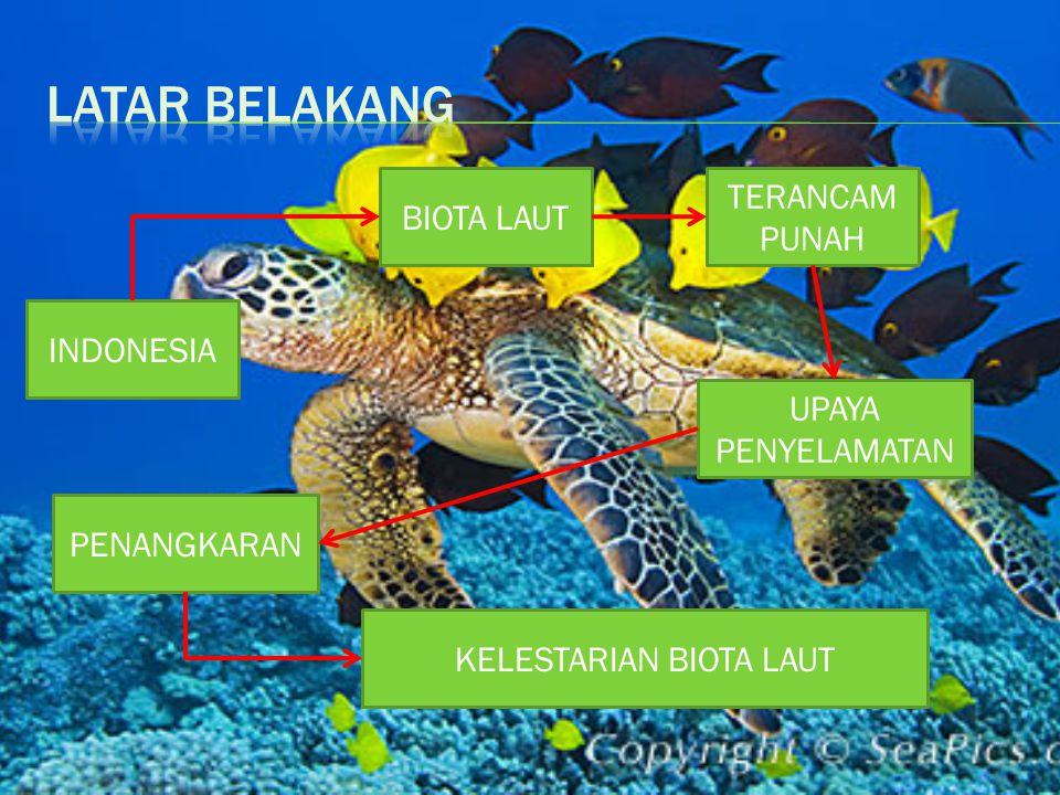 KELESTARIAN BIOTA LAUT PENANGKARAN UPAYA PENYELAMATAN TERANCAM PUNAH BIOTA LAUT INDONESIA