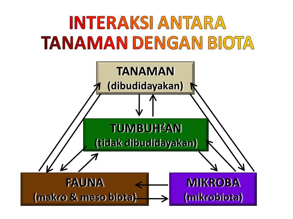 TANAMAN(dibudidayakan) FAUNA (makro & meso biota) MIKROBA(mikrobiota) TUMBUH 2 AN (tidak dibudidayakan)