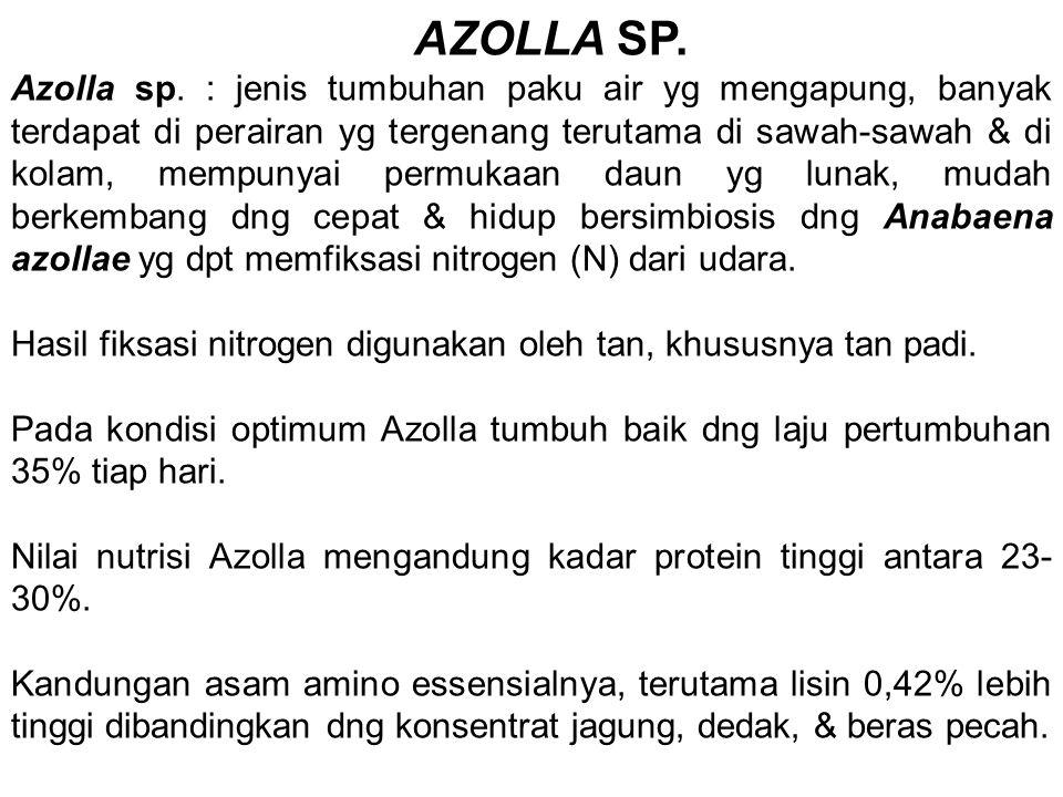 AZOLLA SP. Azolla sp. : jenis tumbuhan paku air yg mengapung, banyak terdapat di perairan yg tergenang terutama di sawah-sawah & di kolam, mempunyai p