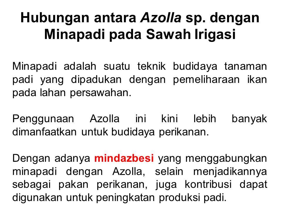 Hubungan antara Azolla sp. dengan Minapadi pada Sawah Irigasi Minapadi adalah suatu teknik budidaya tanaman padi yang dipadukan dengan pemeliharaan ik