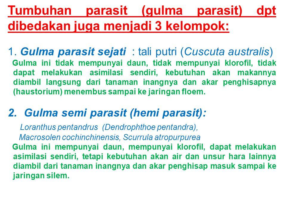 Tumbuhan parasit (gulma parasit) dpt dibedakan juga menjadi 3 kelompok: 1. Gulma parasit sejati : tali putri (Cuscuta australis) Gulma ini tidak mempu