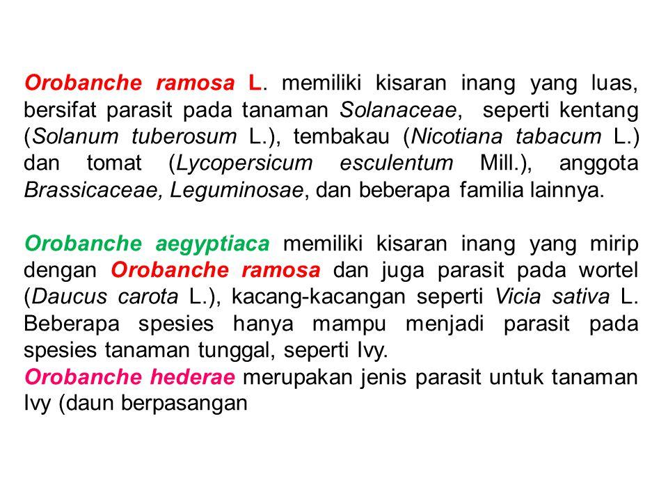 Orobanche ramosa L. memiliki kisaran inang yang luas, bersifat parasit pada tanaman Solanaceae, seperti kentang (Solanum tuberosum L.), tembakau (Nico