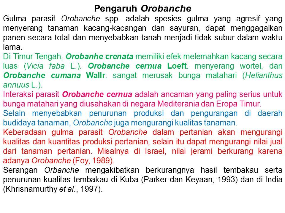 Pengaruh Orobanche Gulma parasit Orobanche spp. adalah spesies gulma yang agresif yang menyerang tanaman kacang-kacangan dan sayuran, dapat menggagalk