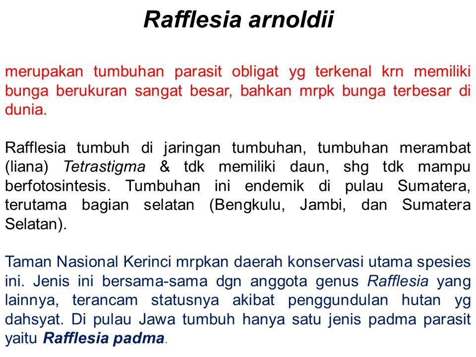 Rafflesia arnoldii merupakan tumbuhan parasit obligat yg terkenal krn memiliki bunga berukuran sangat besar, bahkan mrpk bunga terbesar di dunia. Raff