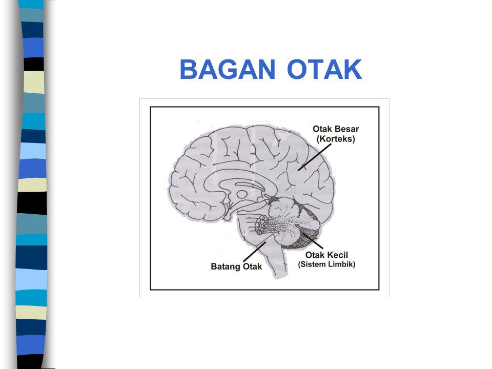 BAGAN OTAK