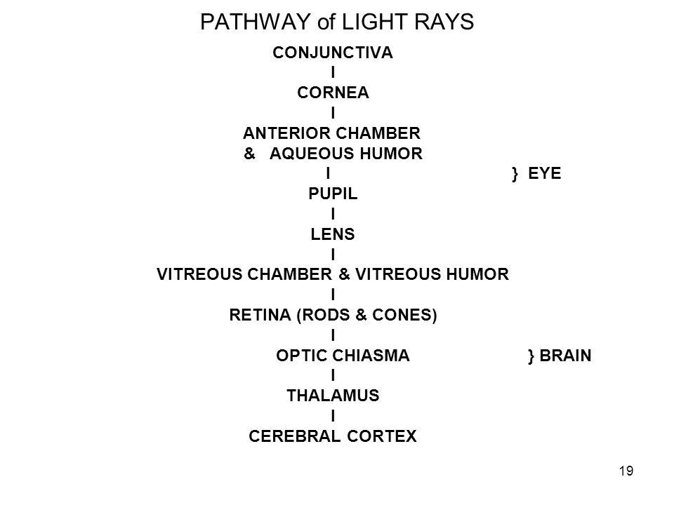 19 PATHWAY of LIGHT RAYS CONJUNCTIVA I CORNEA I ANTERIOR CHAMBER & AQUEOUS HUMOR I } EYE PUPIL I LENS I VITREOUS CHAMBER & VITREOUS HUMOR I RETINA (RO