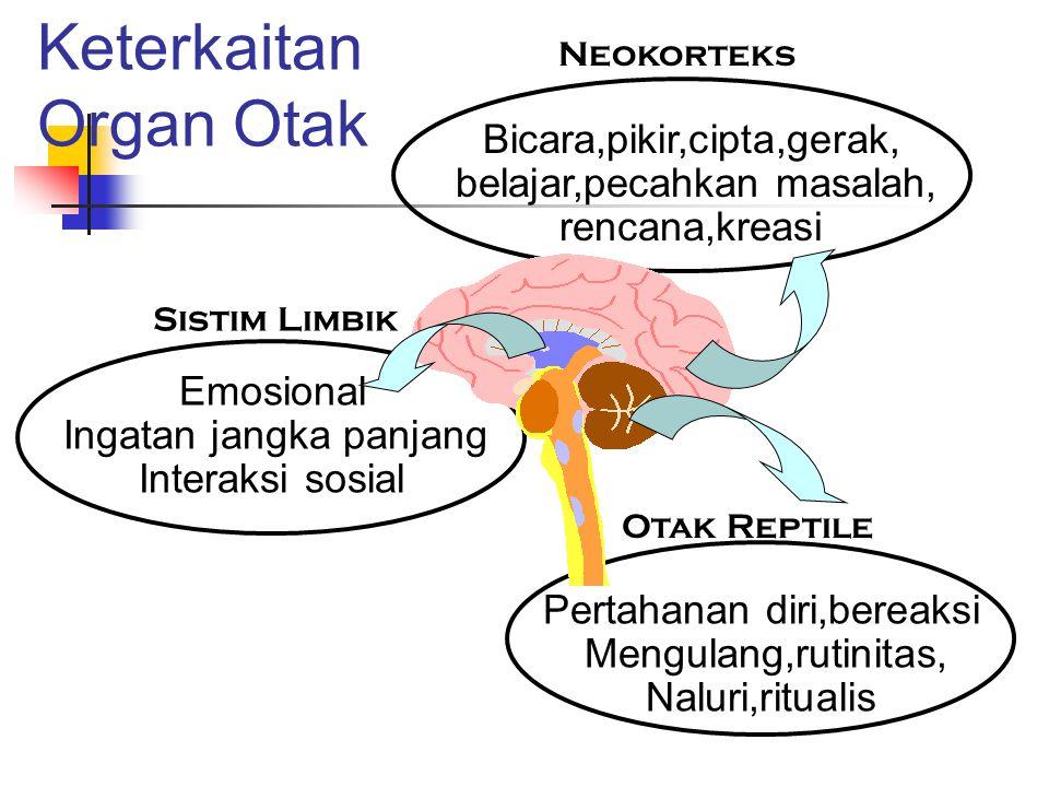 Keterkaitan Organ Otak Bicara,pikir,cipta,gerak, belajar,pecahkan masalah, rencana,kreasi Neokorteks Emosional Ingatan jangka panjang Interaksi sosial