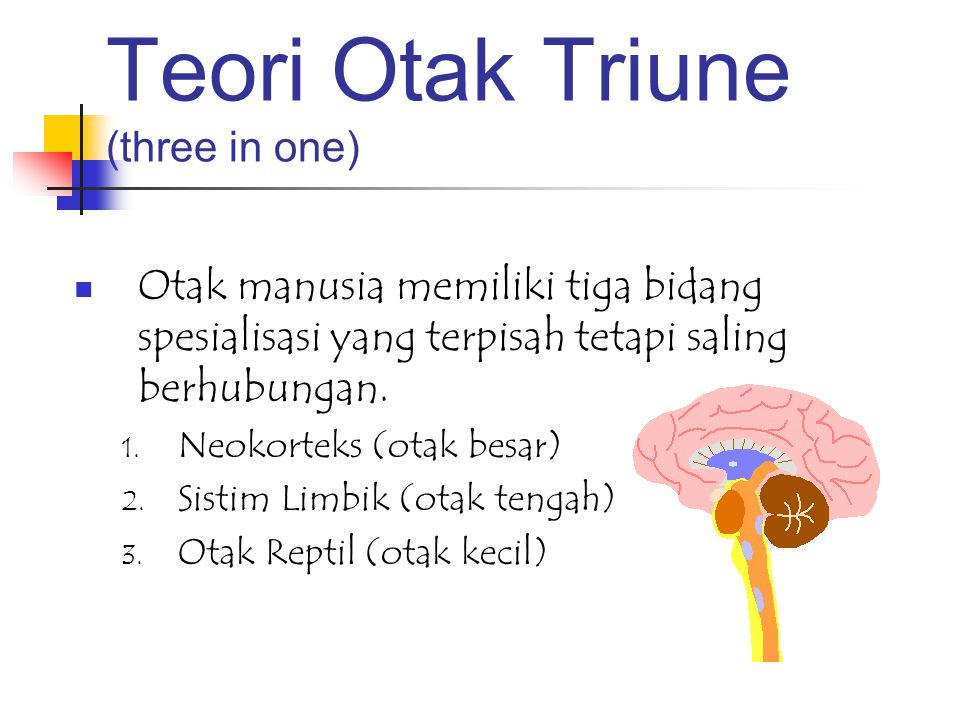 Teori Otak Triune (three in one) Otak manusia memiliki tiga bidang spesialisasi yang terpisah tetapi saling berhubungan. 1. Neokorteks (otak besar) 2.