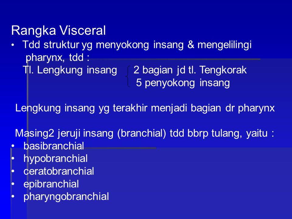 Rangka Visceral Tdd struktur yg menyokong insang & mengelilingi pharynx, tdd : Tl.