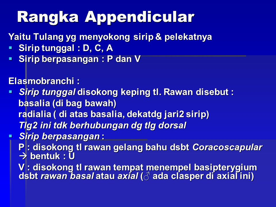 Rangka Appendicular Yaitu Tulang yg menyokong sirip & pelekatnya  Sirip tunggal : D, C, A  Sirip berpasangan : P dan V Elasmobranchi :  Sirip tunggal disokong keping tl.