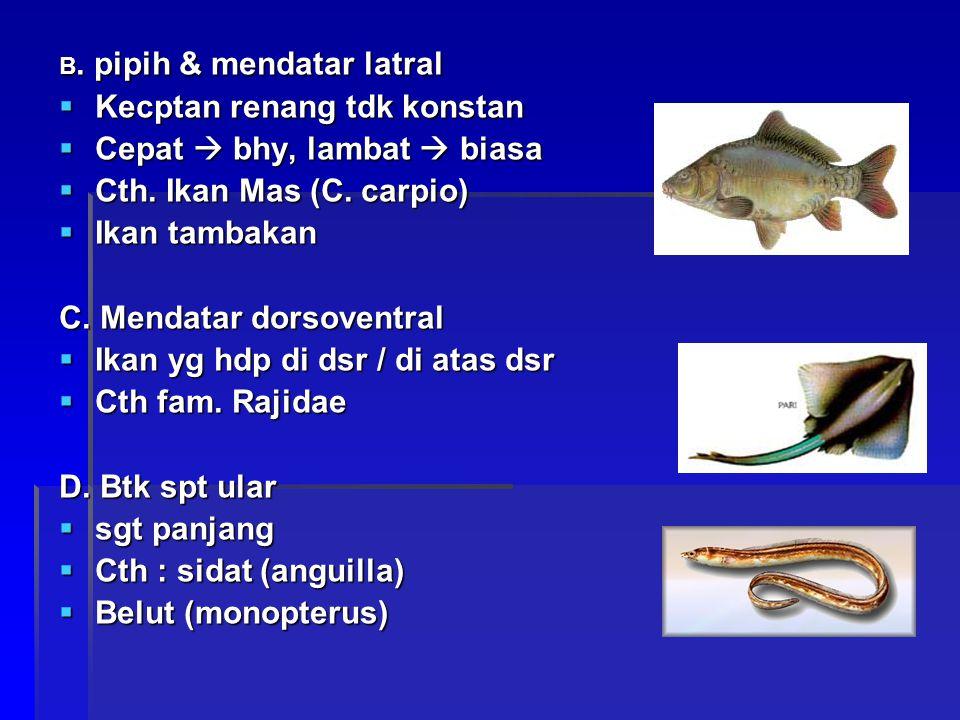 B. pipih & mendatar latral  Kecptan renang tdk konstan  Cepat  bhy, lambat  biasa  Cth. Ikan Mas (C. carpio)  Ikan tambakan C. Mendatar dorsoven