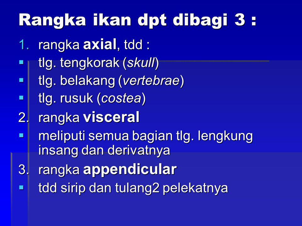 1.Supra scapula2. scapula 3. coracoid4. sirip pectoral 5.