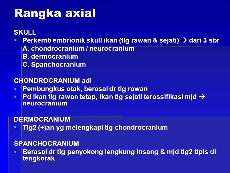 Rangka axial SKULL  Perkemb embrionik skull ikan (tlg rawan & sejati)  dari 3 sbr A. chondrocranium / neurocranium B. dermocranium C. Spanchocranium