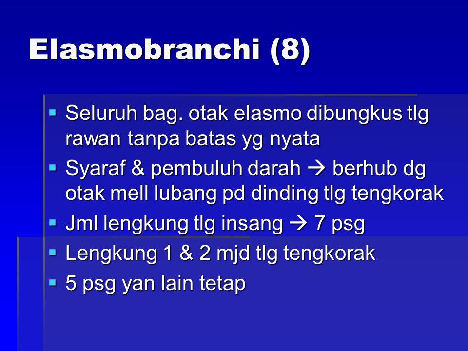 Elasmobranchi (8)  Seluruh bag. otak elasmo dibungkus tlg rawan tanpa batas yg nyata  Syaraf & pembuluh darah  berhub dg otak mell lubang pd dindin