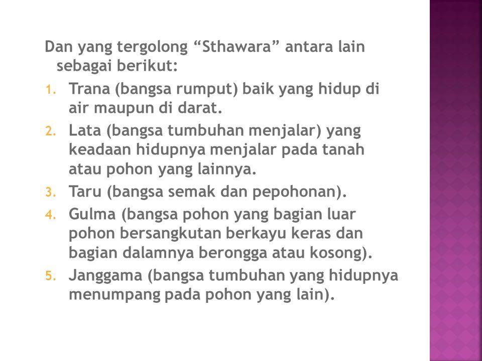 Dan yang tergolong Sthawara antara lain sebagai berikut: 1.