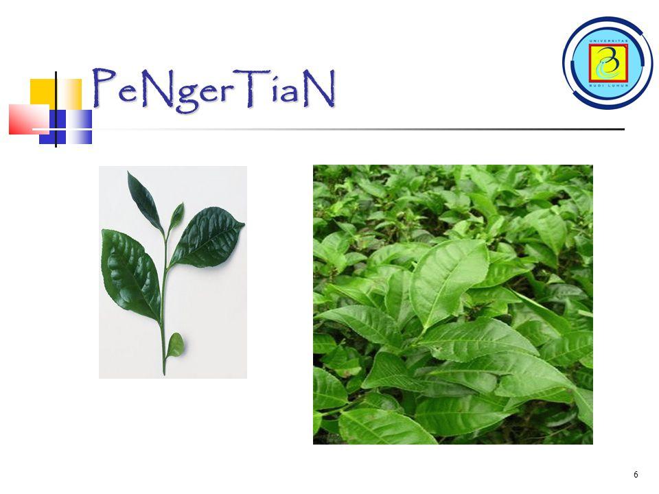 5 PenGerTiaN TEH adalah Teh adalah minuman yang mengandung kafein, sebuah infusi yang dibuat dengan cara menyeduh daun, pucuk daun, atau tangkai daun yang dikeringkan dari tanaman Camellia sinensis dengan air panas