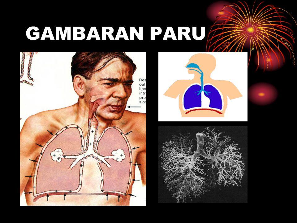 GAMBARAN PARU