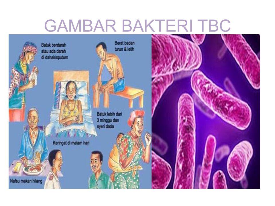 GAMBAR BAKTERI TBC