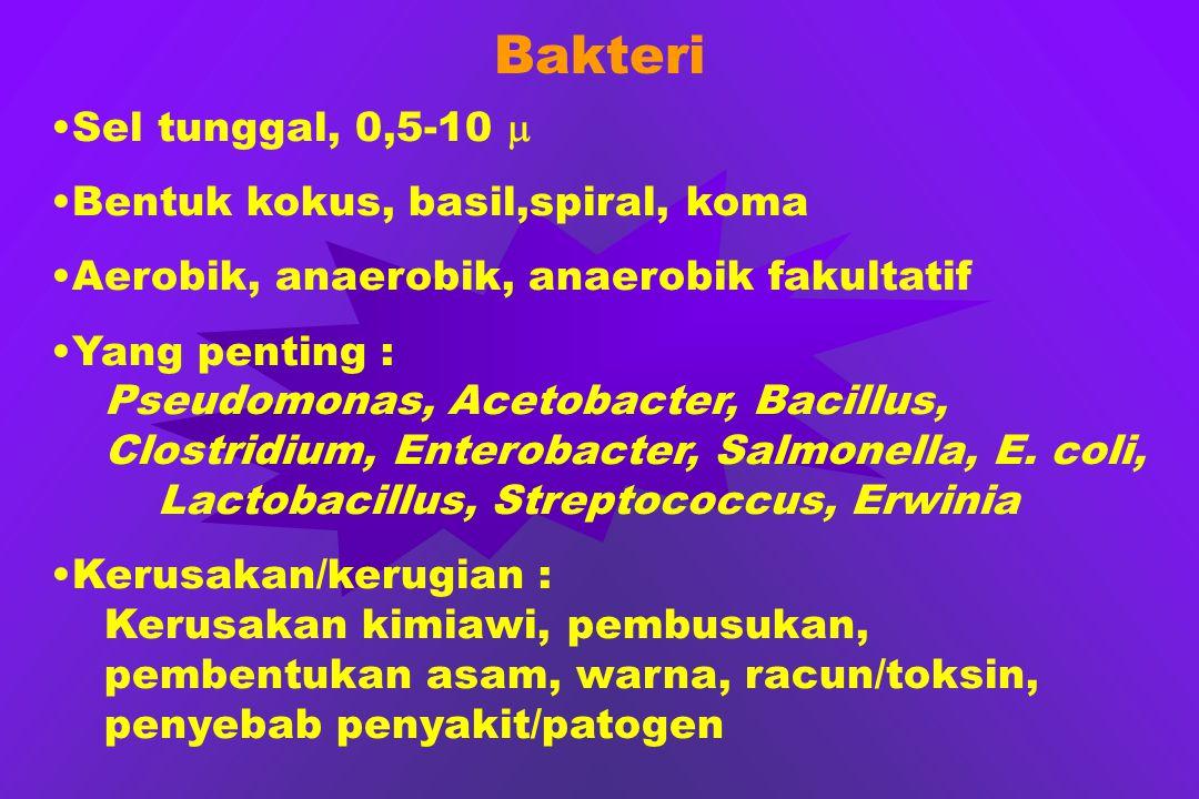 Bakteri Sel tunggal, 0,5-10  Bentuk kokus, basil,spiral, koma Aerobik, anaerobik, anaerobik fakultatif Yang penting : Pseudomonas, Acetobacter, Bacil