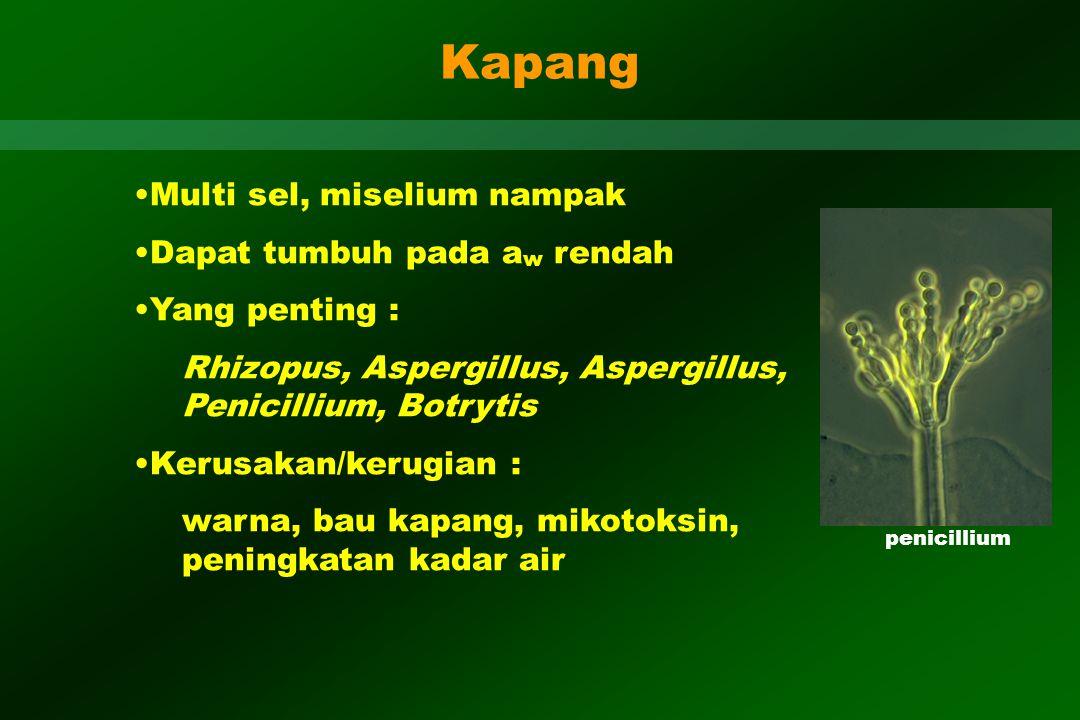 Kapang Multi sel, miselium nampak Dapat tumbuh pada a w rendah Yang penting : Rhizopus, Aspergillus, Aspergillus, Penicillium, Botrytis Kerusakan/keru