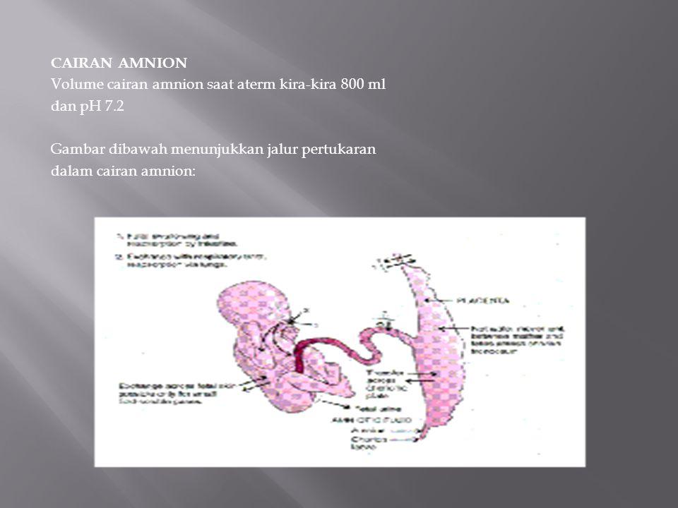 CAIRAN AMNION Volume cairan amnion saat aterm kira-kira 800 ml dan pH 7.2 Gambar dibawah menunjukkan jalur pertukaran dalam cairan amnion: