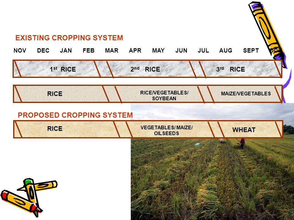 NOV DEC JAN FEB MAR APR MAY JUN JUL AUG SEPT OCT 1 st RICE 2 nd RICE 3 rd RICE RICE RICE/VEGETABLES/ SOYBEAN MAIZE/VEGETABLES PROPOSED CROPPING SYSTEM EXISTING CROPPING SYSTEMRICE VEGETABLES/ MAIZE/ OILSEEDS WHEAT