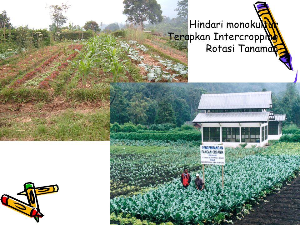 Hindari monokultur Terapkan Intercropping Rotasi Tanaman