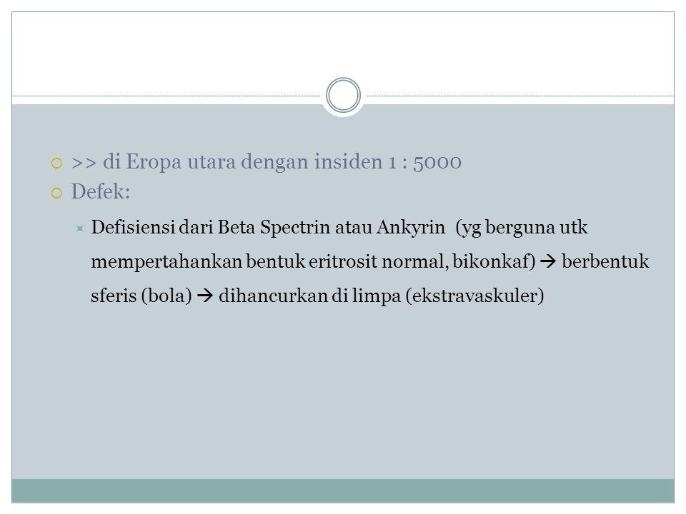  >> di Eropa utara dengan insiden 1 : 5000  Defek:  Defisiensi dari Beta Spectrin atau Ankyrin (yg berguna utk mempertahankan bentuk eritrosit normal, bikonkaf)  berbentuk sferis (bola)  dihancurkan di limpa (ekstravaskuler)