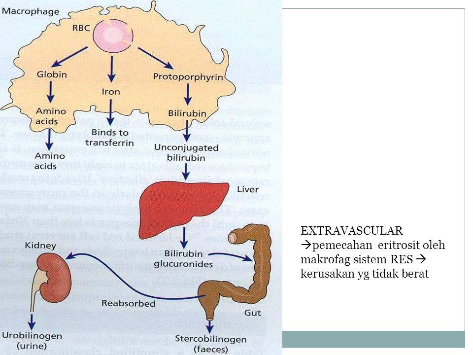 EXTRAVASCULAR  pemecahan eritrosit oleh makrofag sistem RES  kerusakan yg tidak berat