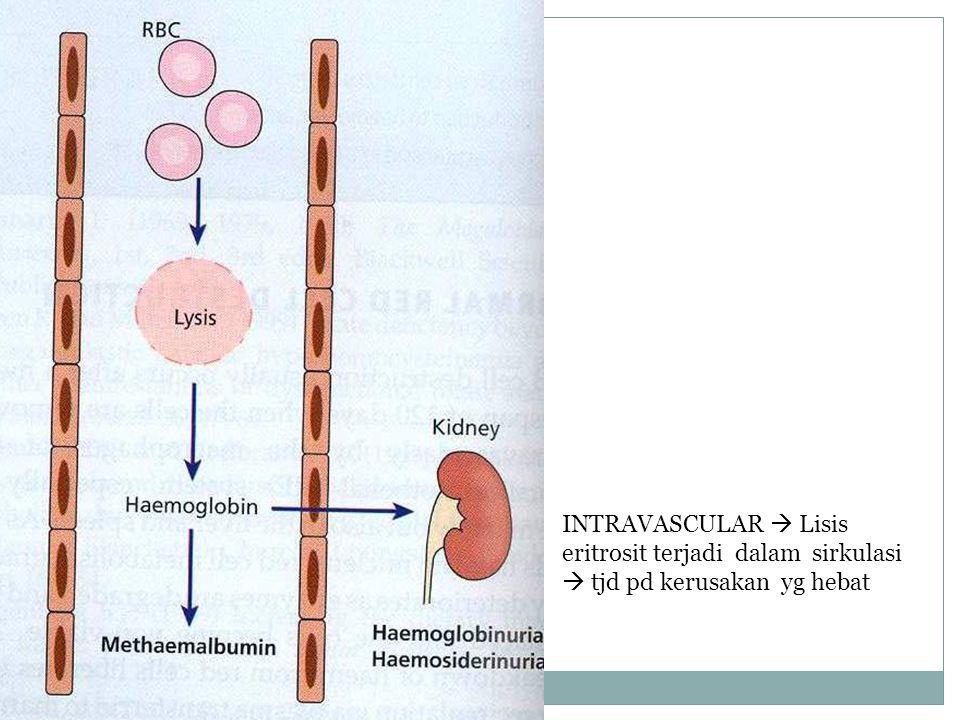 INTRAVASCULAR  Lisis eritrosit terjadi dalam sirkulasi  tjd pd kerusakan yg hebat