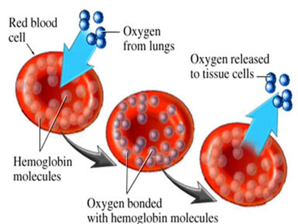 Early anemia Kadar hb menurun menjadi 10 – 11, ada perubahan bentuk morfologi sel darah, MCHC (mean carpuscular haemoglobin concentration) tetap di atas 30%, ada penurunan kadar transferin saturation Anemia Kadar transferin saturation turun lagi, tjd perubhan bentuk dan ukuran sel darah dgn jelas, Kadar MCHC < 30% Fase Defisiensi Zat Besi