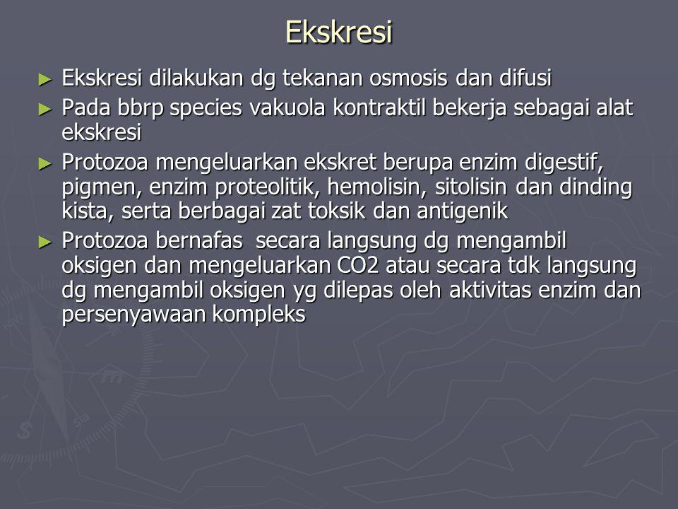 Ekskresi ► Ekskresi dilakukan dg tekanan osmosis dan difusi ► Pada bbrp species vakuola kontraktil bekerja sebagai alat ekskresi ► Protozoa mengeluark
